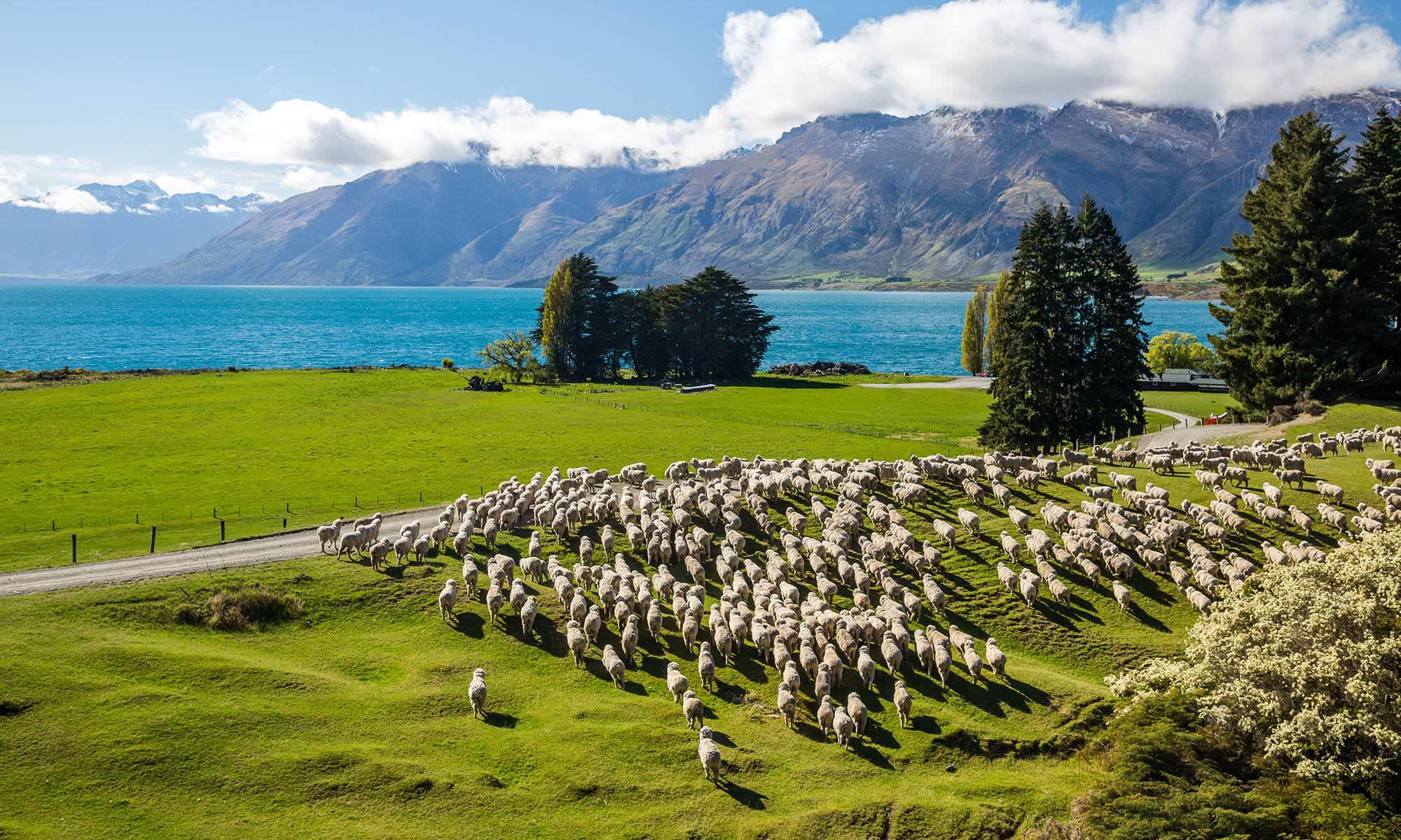 Kerja di New Zealand